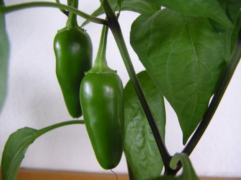 Peppers, Jalapeno Peppers