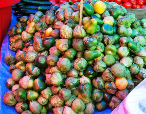 Tomatillos, Red-purple