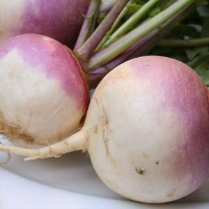 Purple Top White Globe Turnip Credit: thebittenword.com