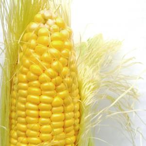 Corn, Standard Corn