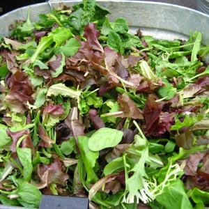 Lettuce, Mesclun Mix Credit: Rudi Riet