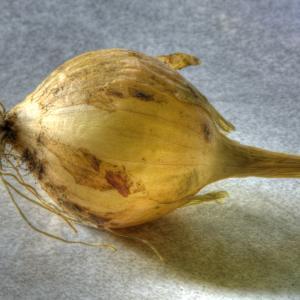 Onion, Walla Walla
