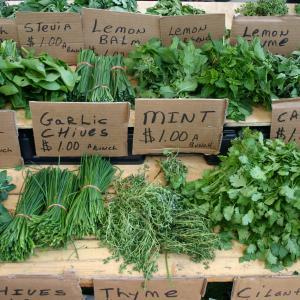 Standard Herbs Credit: Danielle Walquist Lynch