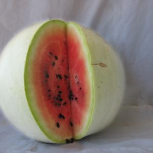 Navajo Red-Seeded Watermelon Credit: Native Seed Search